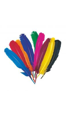 OZ INTERNATIONAL - SC00655 - Plume indien coloris assorti -sachet de 10