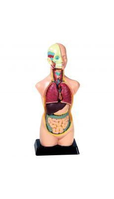 Set anatomie 11 pieces - 50cm