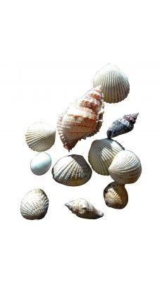 Sachet de 400g de coquillages assortis